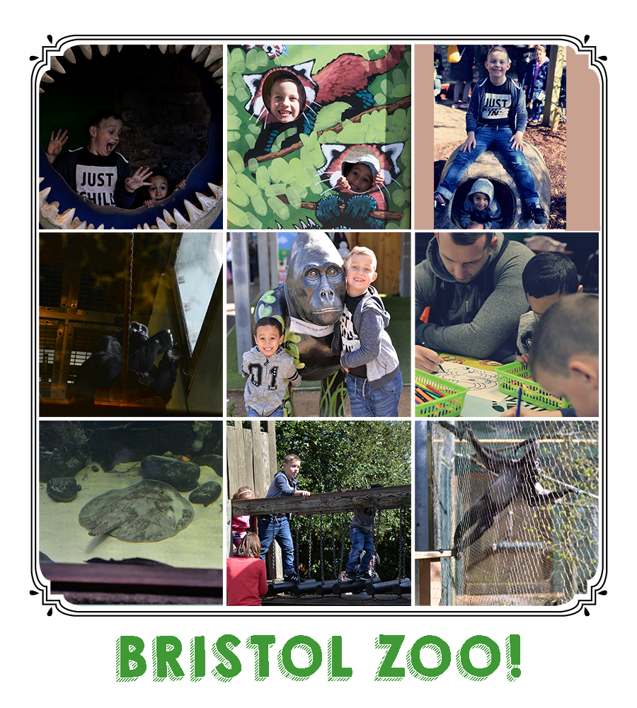 BRISTOL ZOO COLLAGE.jpg